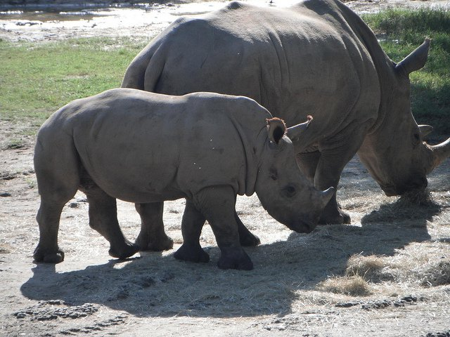 most-poached-animals-world-environment-day