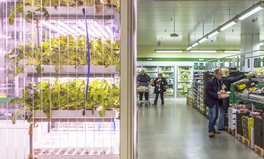 Article: This Berlin grocery store lets people pick produce straight from the plant