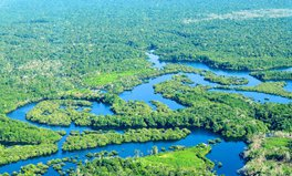 Article: How are Unilever and WWF protecting rainforests?