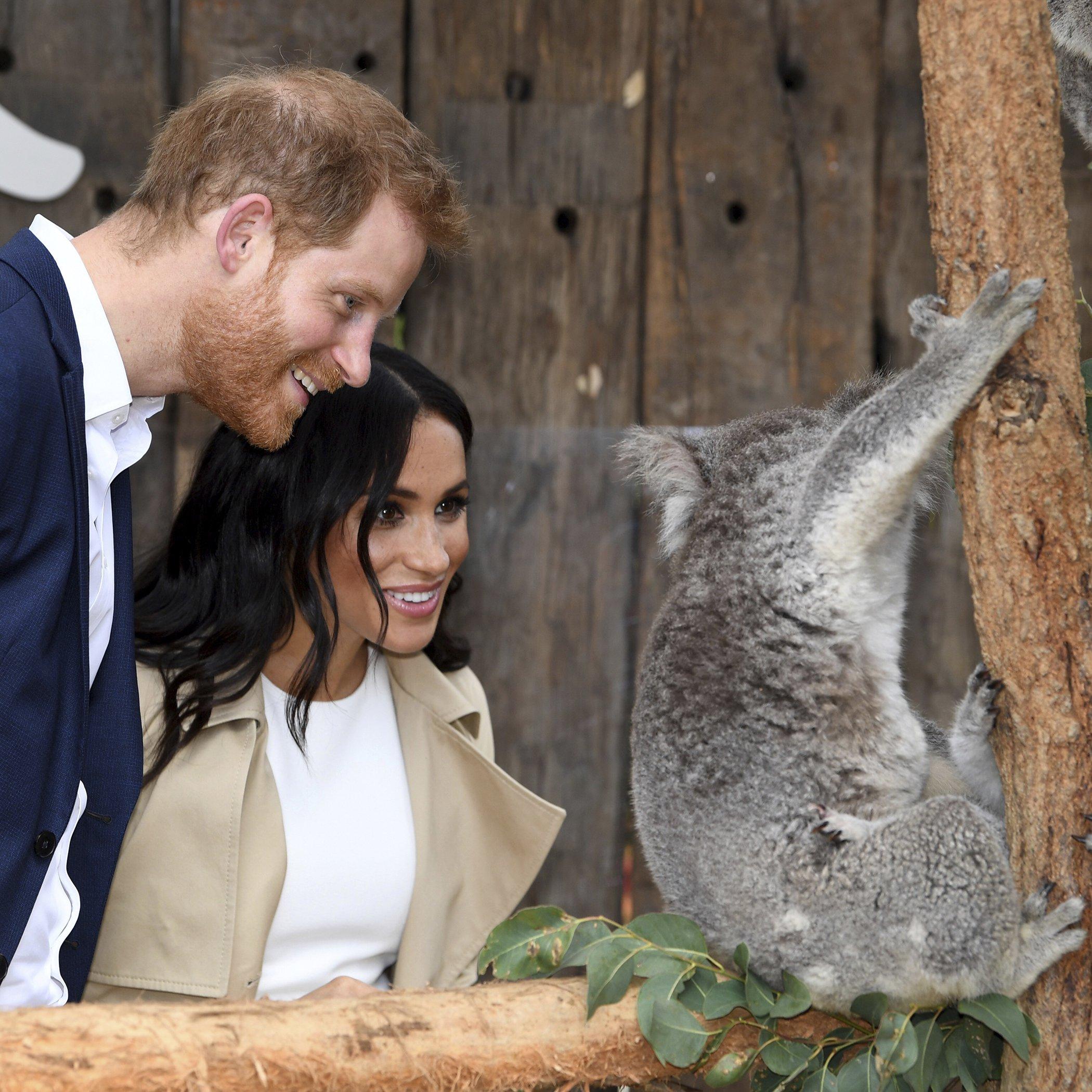 Harry-Meghan-Australia-Koala.jpg