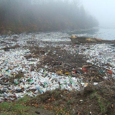 Verschmutzte Gewässer.jpg