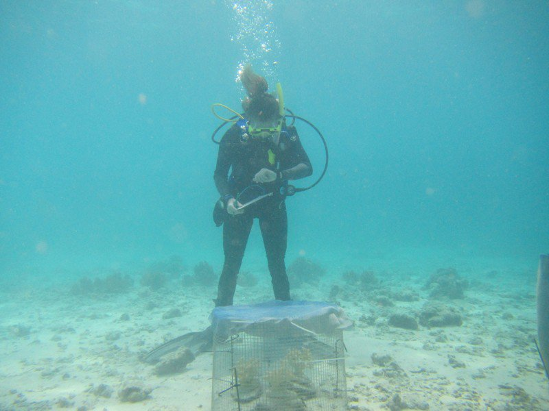 Scientists Are 3D-Printing Coral Reefs to Prevent Extinction