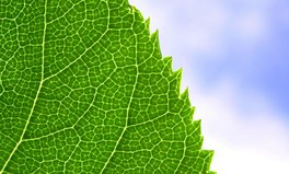 Article: This 'bionic leaf' is turning sunlight into fuel