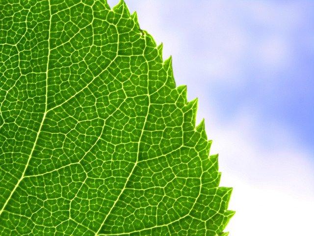 Green leaf, blue sky