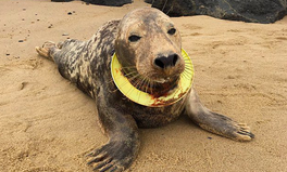 Article: A Seal Found With a Frisbee Cutting Into Her Neck Is Now Back in the Wild