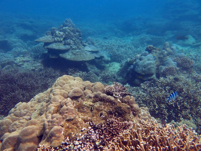 Coral reefs seychelles.jpg