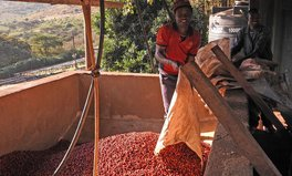 Article: Why Your Expensive Cup of Kenyan Coffee Might Actually Be Worth It