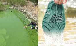 Article: This Lake Is Terribly Polluted. But Now a New Shoe Is Helping to Clean It Up