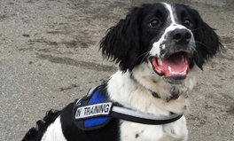 Article: Angus, the Cute Superbug-Sniffing Dog, Is Combating a Growing Health Crisis