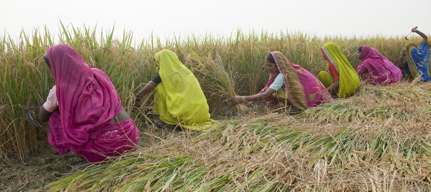essay on problems of indian farmers What are the problems faced by indian farmers  similar problems farmers face today- mainly irrigation and dealing with crop destroying pests share to.