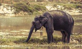 Article: Frightened Elephants Have Killed 10 Rohingya Refugees
