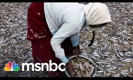 Video: Your food security actions go center stage on MSNBC