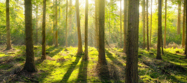 Deutschland investiert 250 Millionen Euro in weltweiten Schutz von Wäldern