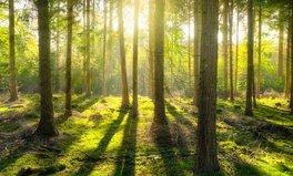 Artikel: Deutschland investiert 250 Millionen Euro in weltweiten Schutz von Wäldern