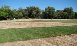 Article: Why This Dead Patch of Grass Is a Good Thing