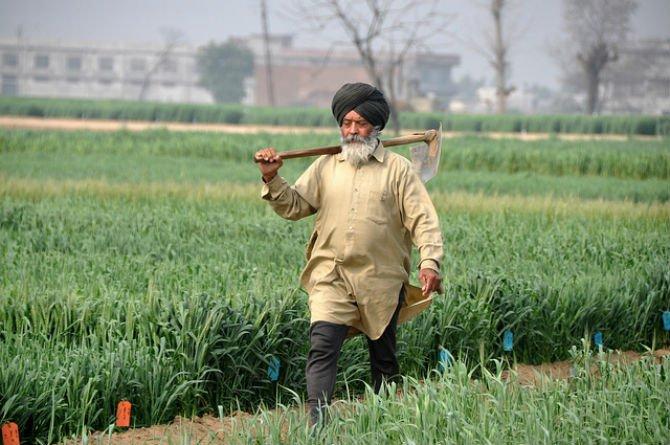 Punjabi Farmer.jpg