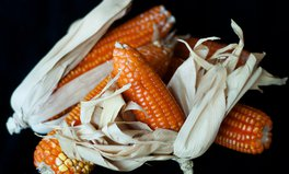 Article: A New Genetically-Modified Maize Is Helping Feed Zimbabwe — But Not Without Controversy