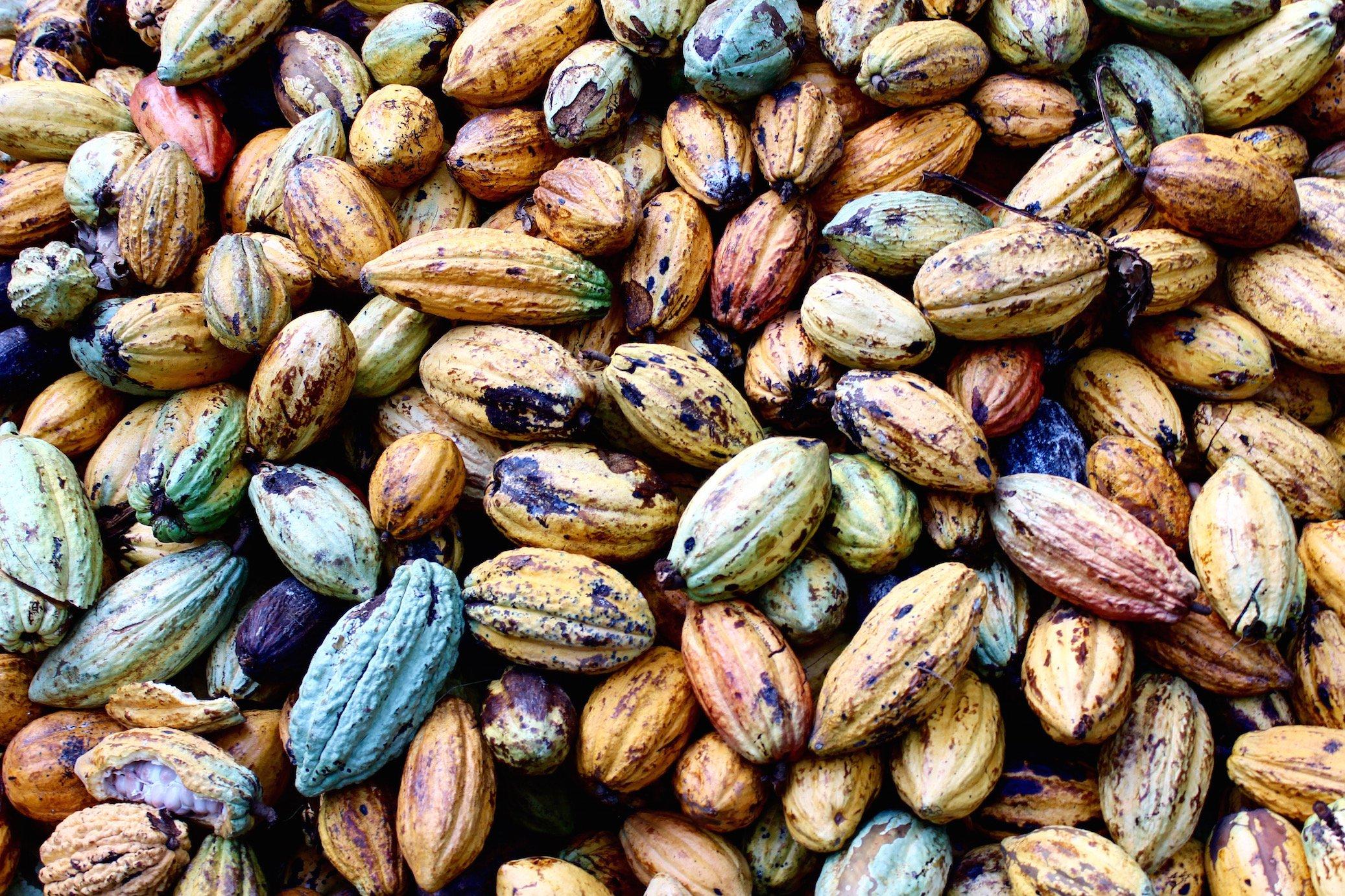 Cacao Ghana.jpg