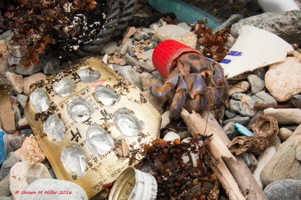 Hermit crab7.jpg