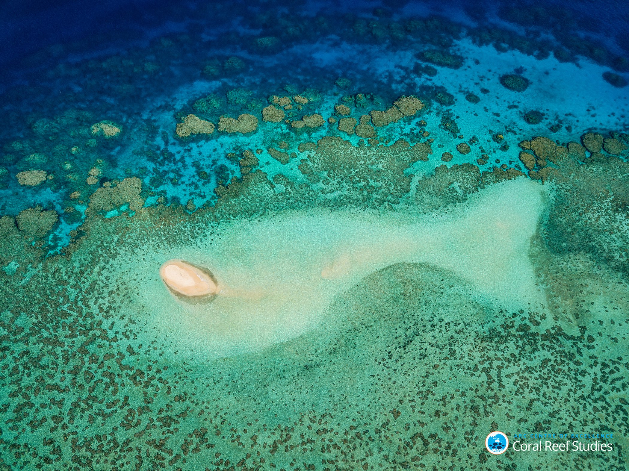 Coral-Bleaching-Great-Barrier-Reef-5.jpg