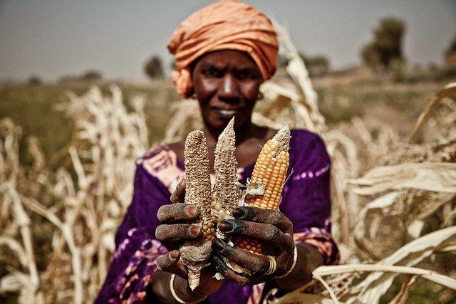 Sahel drought