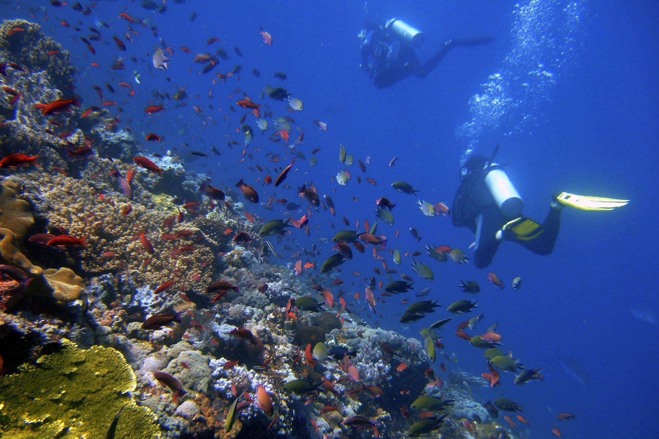 Evironmental-Wins-Protecting-Oceans.jpg