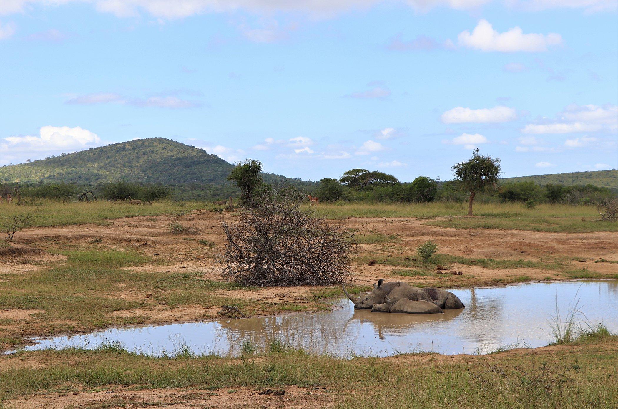 Rhinos-Hluhluwe-iMfolozi Hluhluwe, Kwazulu-Natal-South-Africa.jpg
