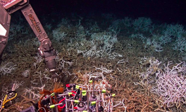 Article: Scientists Just Discovered a Coral Reef Off the Coast of South Carolina