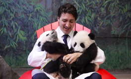Article: Enough Pandas: Video Asks Justin Trudeau to Share His Plan for His 'Feminist' Agenda