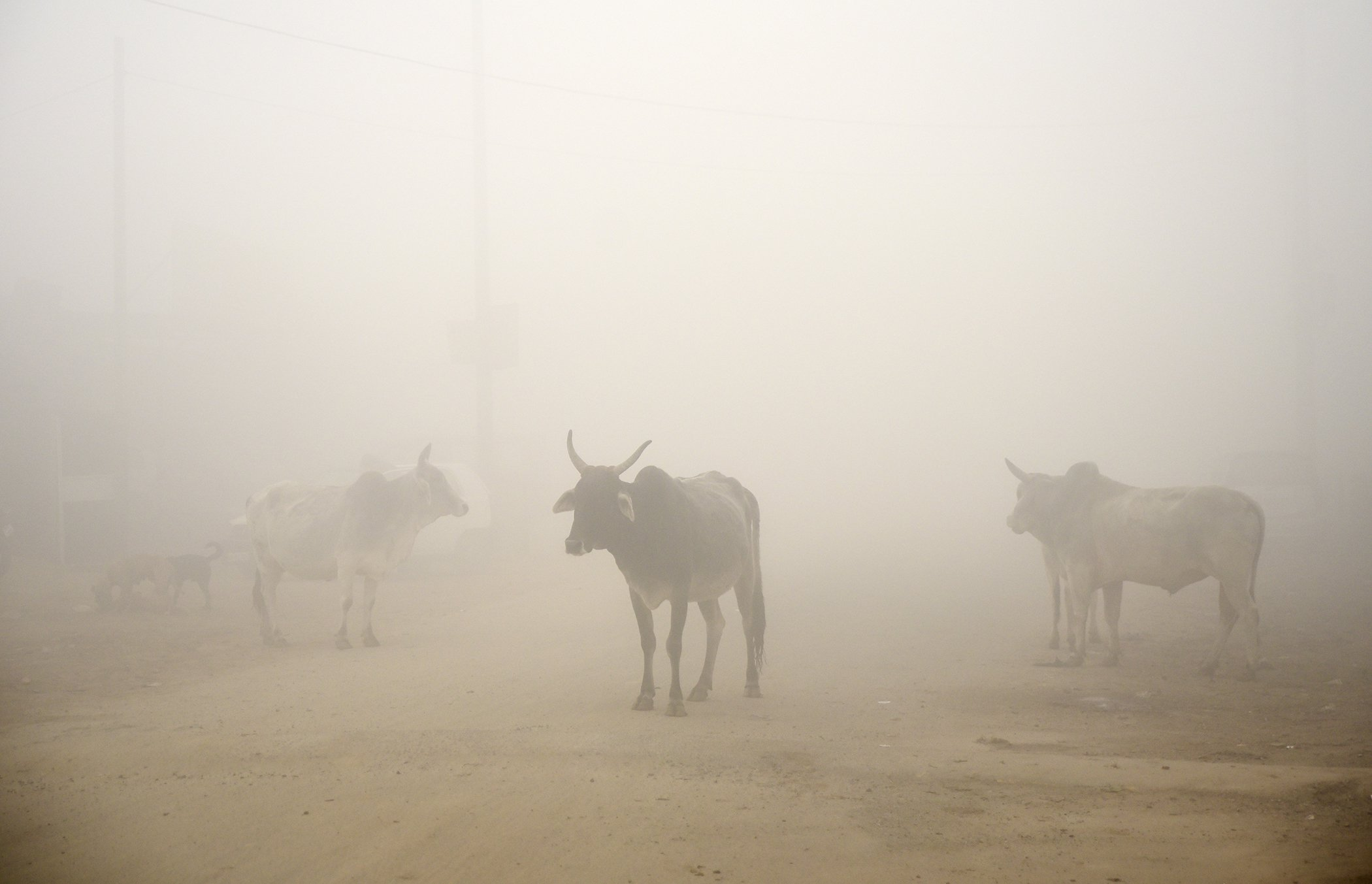 India-Pollution-Smog-Winter.jpg