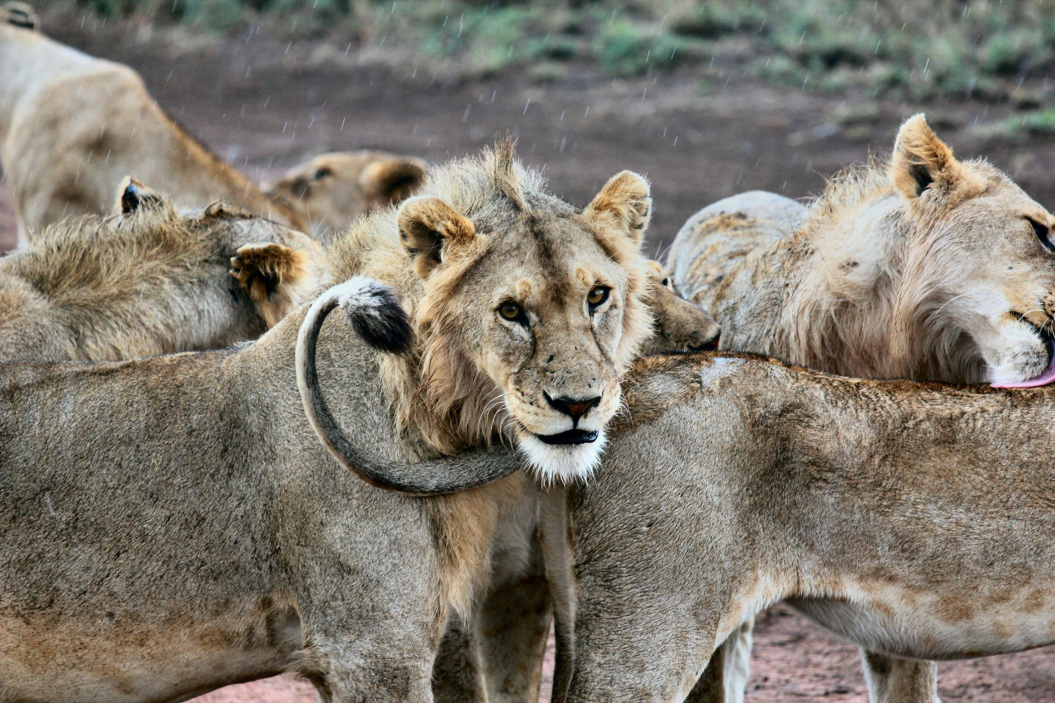 World-Wildlife-Day-Big-Cats-7.jpg