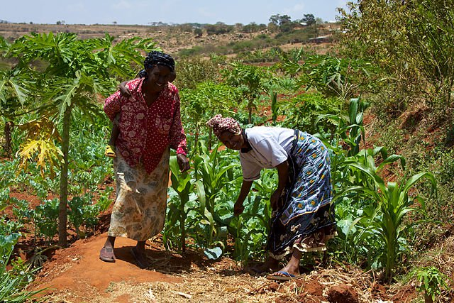 640px-Women_smallholder_farmers_in_Kenya.jpg