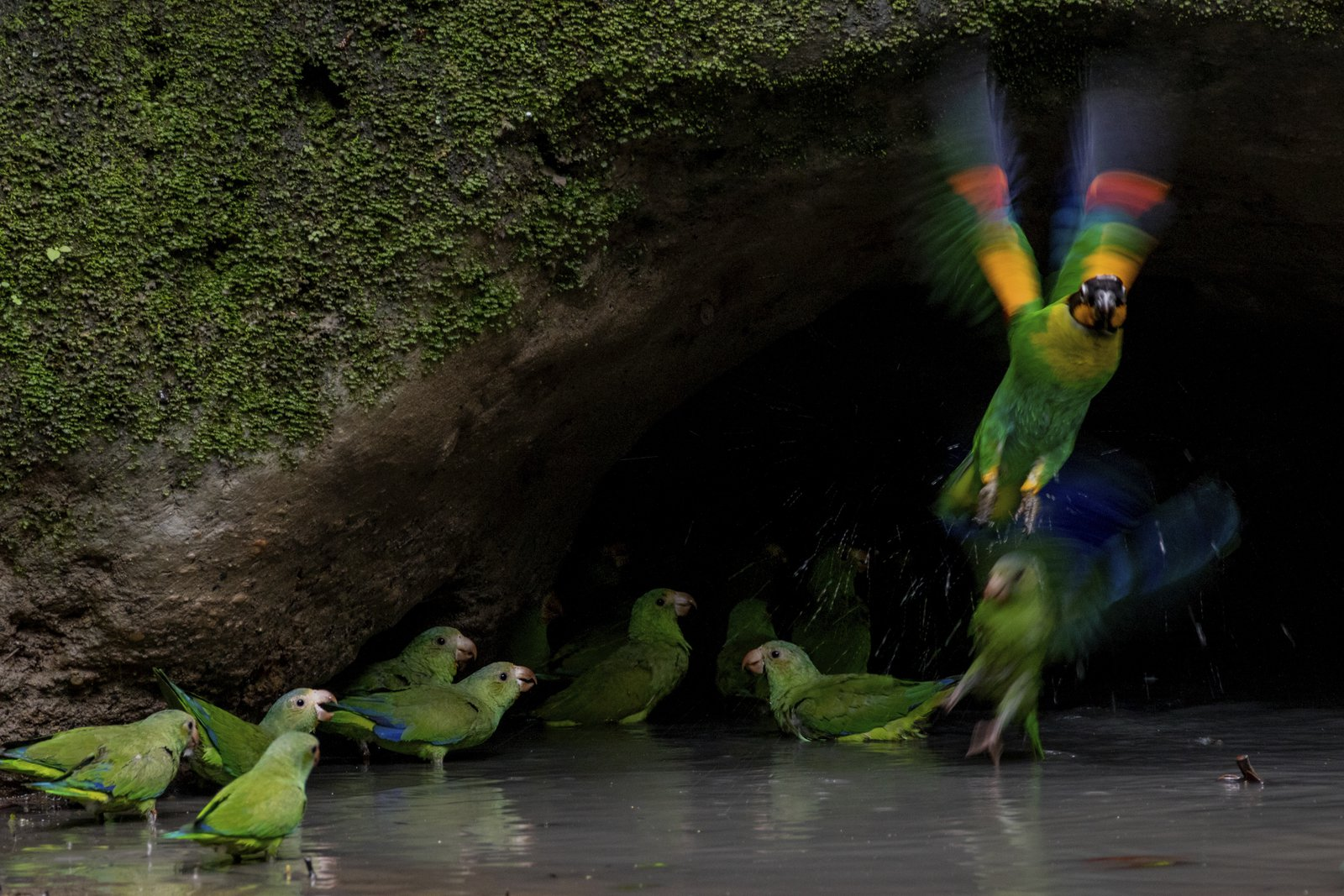 Birds in Amazon