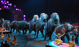 Article: Wales Is Set to Ban Circus Animals — and England Might Follow