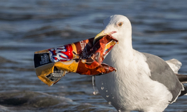 Artículo: 7 Ways to Cut Junk Plastic From Your Life