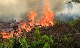 Article: Indonesia's fires may be the environmental catastrophe of the 21st century