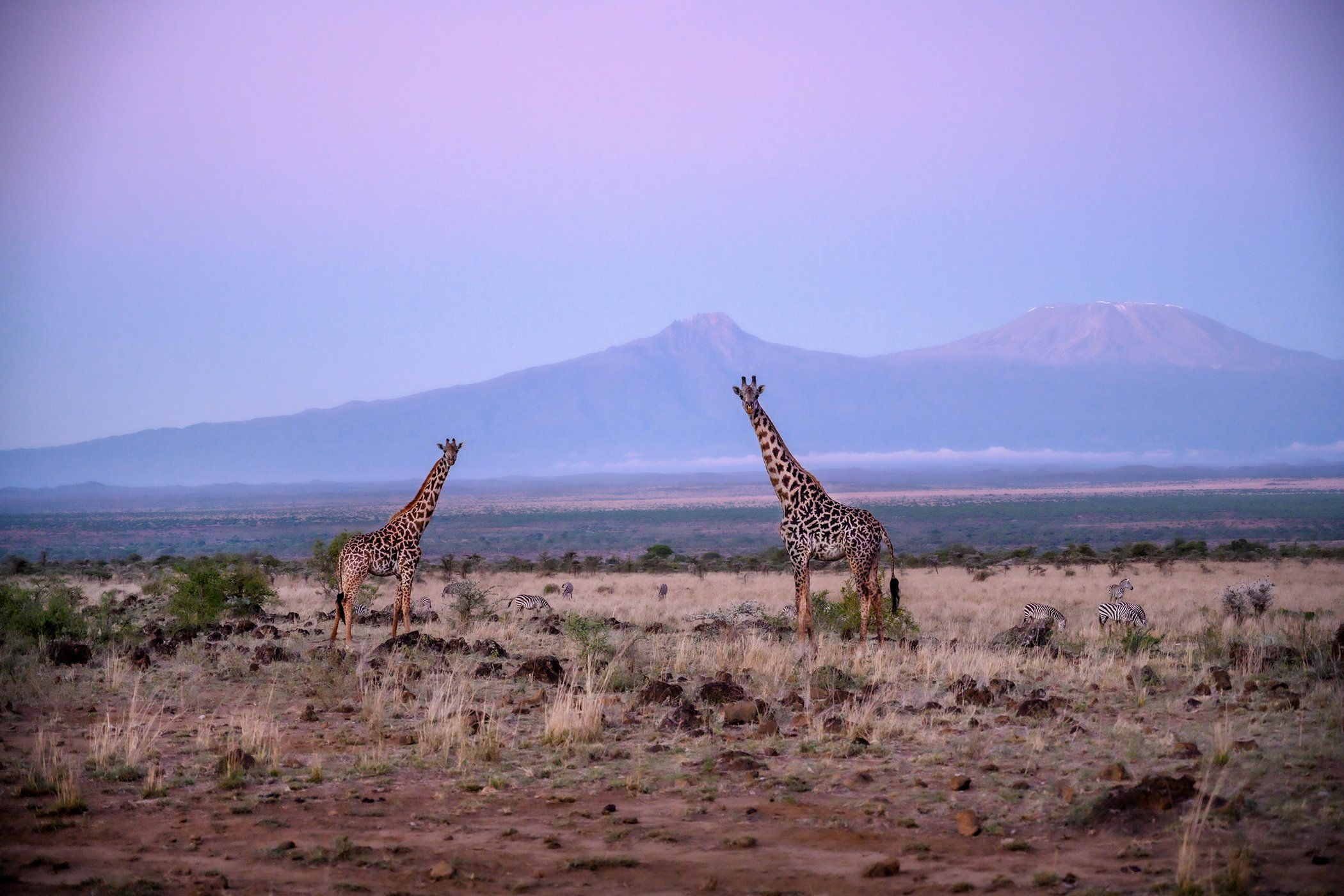 Chyulu Hills-Kenya-Conservation-Covid-19-Impacts-001.jpg