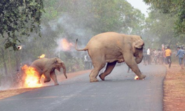 Artikel: This Shocking Photo of Elephants on Fire Ignited a Land Debate in India