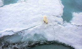 Article: The Plight of Polar Bears Shows Us the Dangers of Climate Change