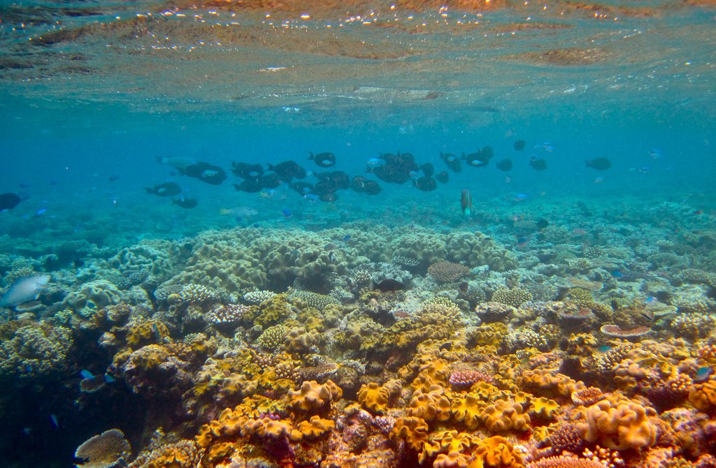 The Great Barrier Reef as We Knew It Is Gone Forever, Scientists Say