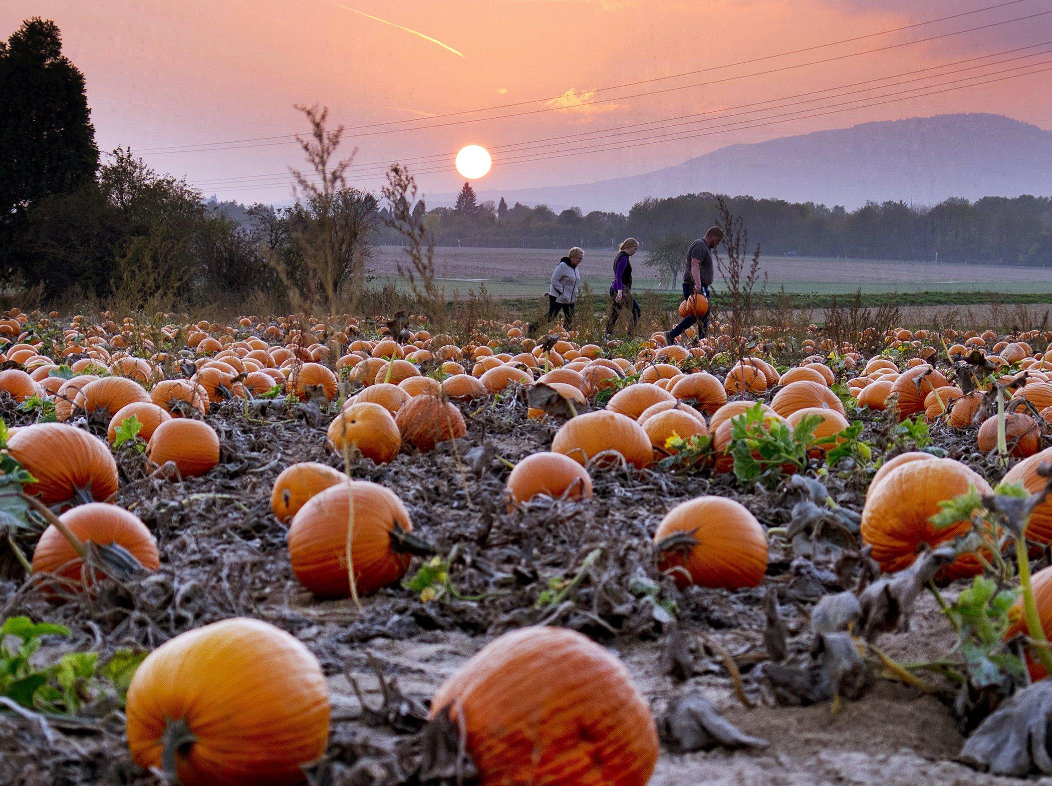 Pumpkin-Patch-Germany-Daily-Life.jpg