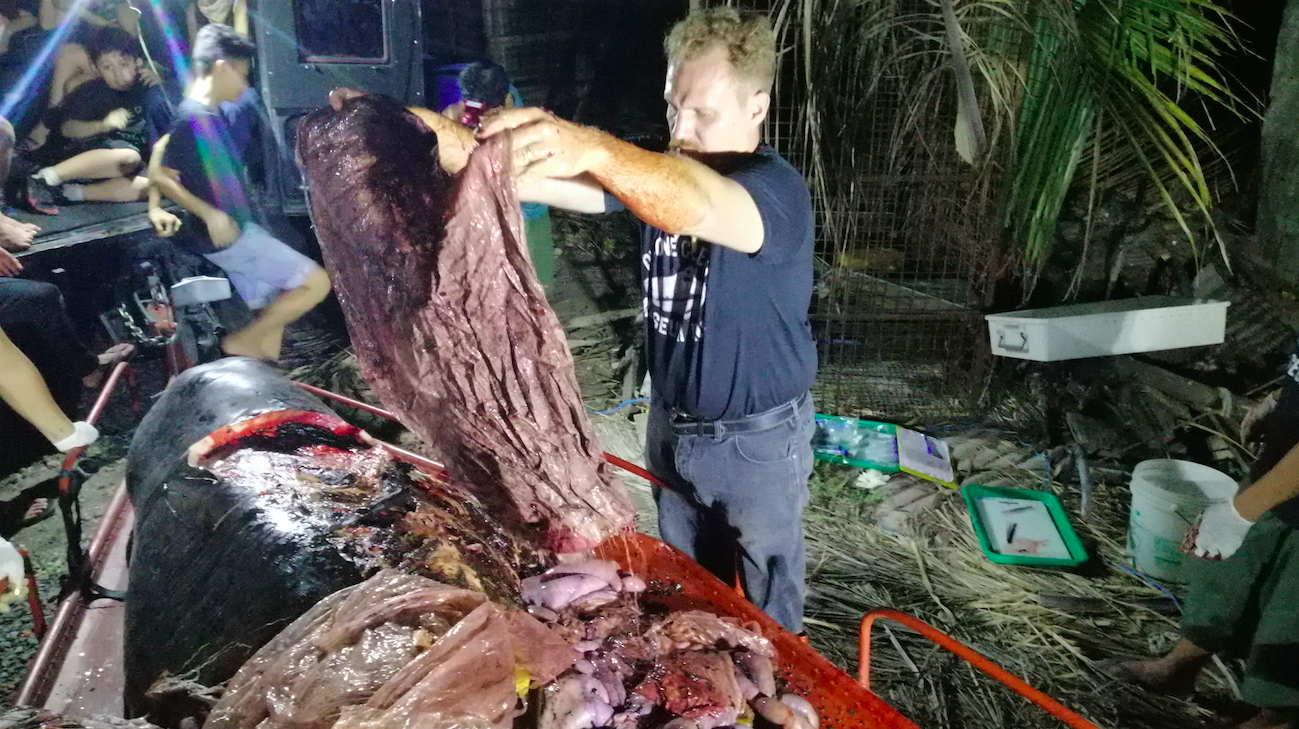 Whale Found With 88 Pounds of Plastic in Stomach Shows Urgency of Zero Waste Movement