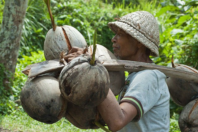 5-trendy-foods-impact-coconuts.jpg