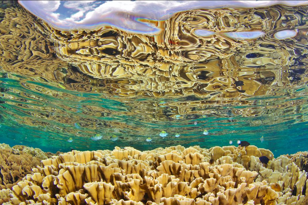 micheal-webster-korallenriff-hoffnung-studie.png