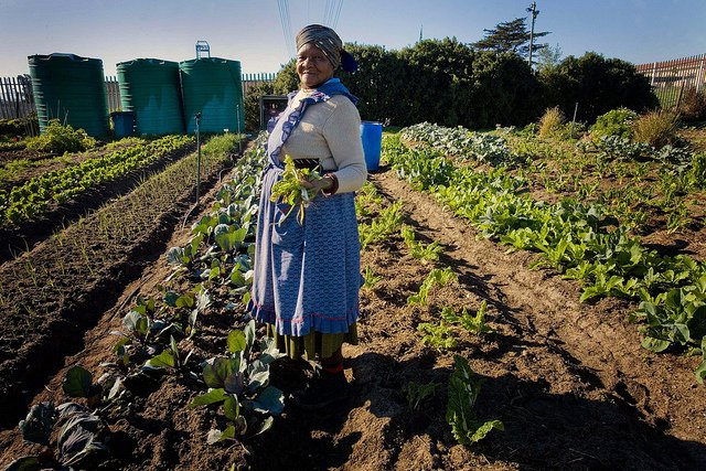 weather-app-increase-yield-african-farmers-body1