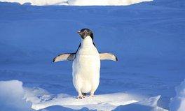 Artikel: Alert! Scientists need your help looking at cute pics of penguins