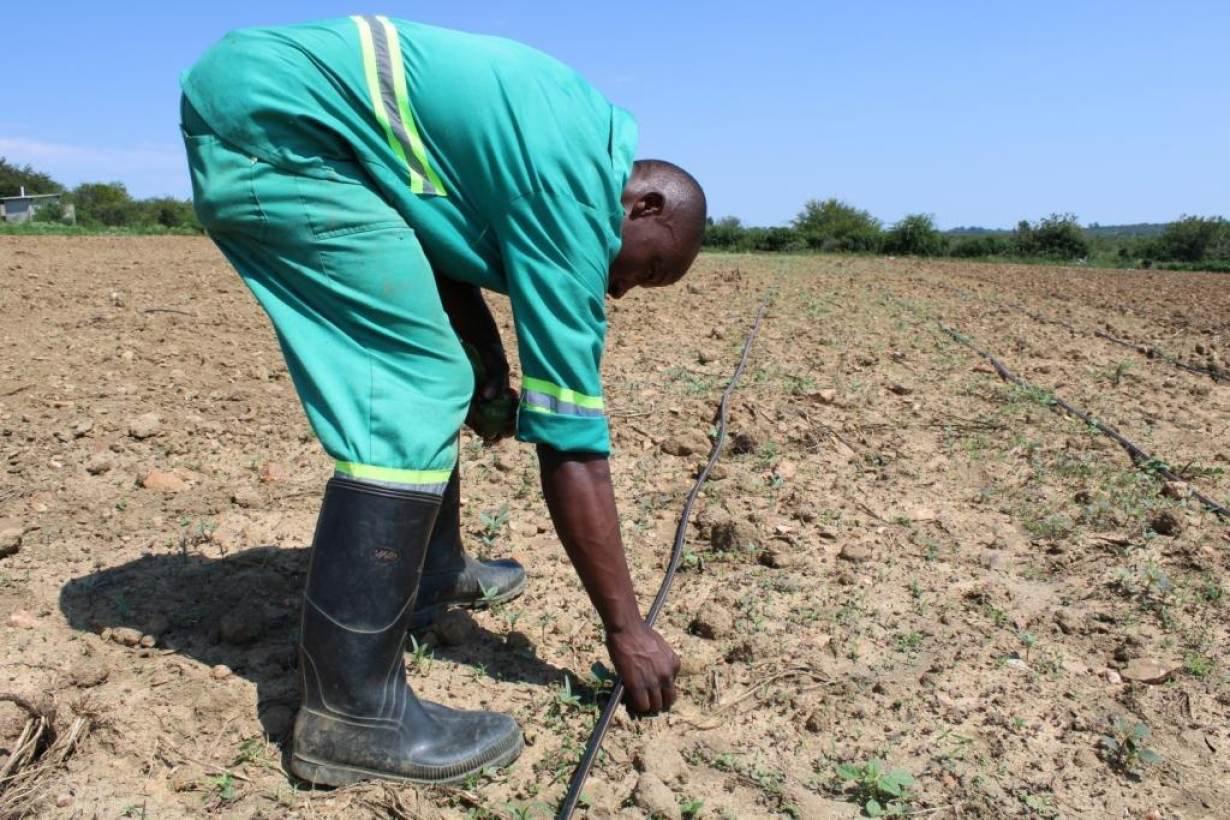 ZWbusani-drip-irrigation-farmer-small.jpg