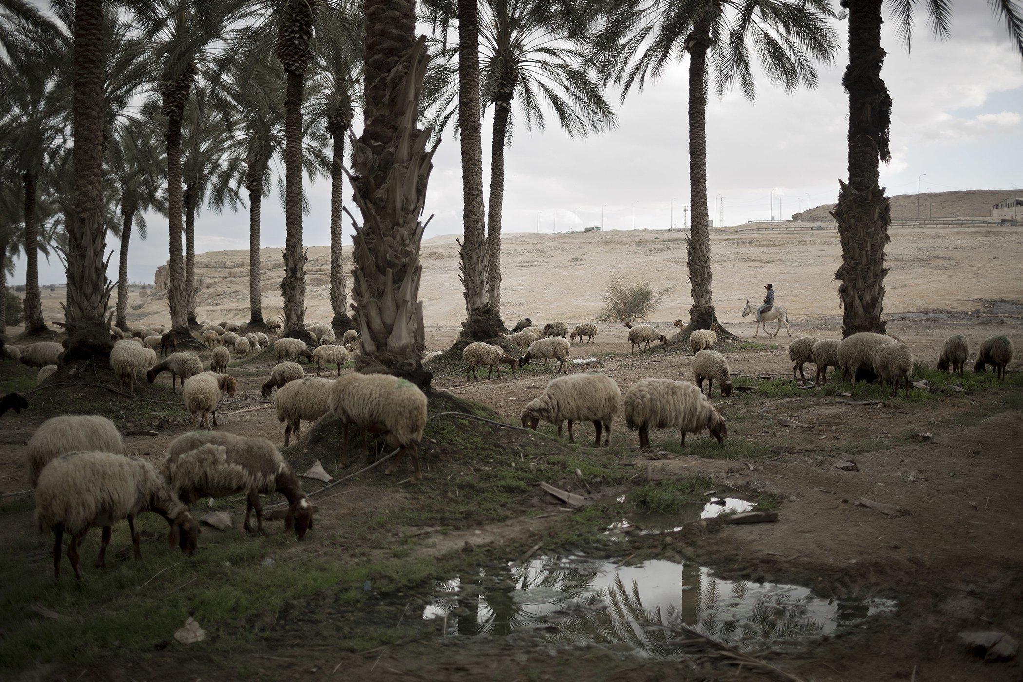 Israel-Drought-Holy-Waters-8.jpg