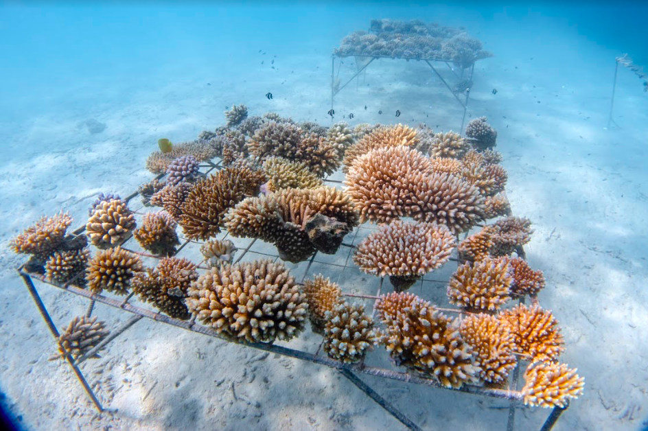 You Can Help Save Coral Reefs With This Reusable Water Bottle