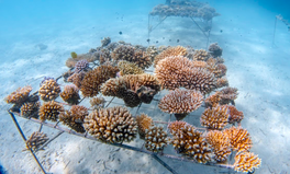 Artículo: You Can Help Save Coral Reefs With This Reusable Water Bottle